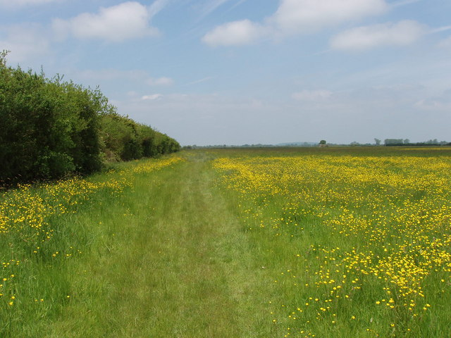 Roman Road on Otmoor, with buttercups