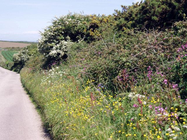 Hedgerow near Pridden