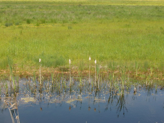 Bulrushes, ditch and marsh on Otmoor