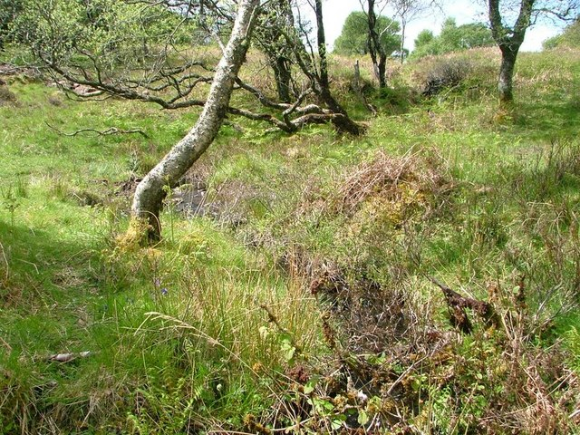 Natural Woodland, A' Chrannag