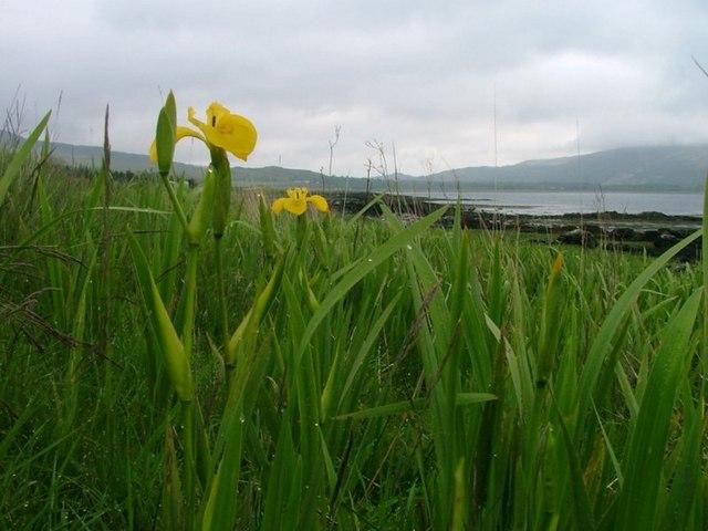 North shore of Loch na Keal