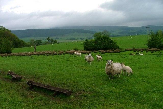 Pasture Near Lochwood Mains