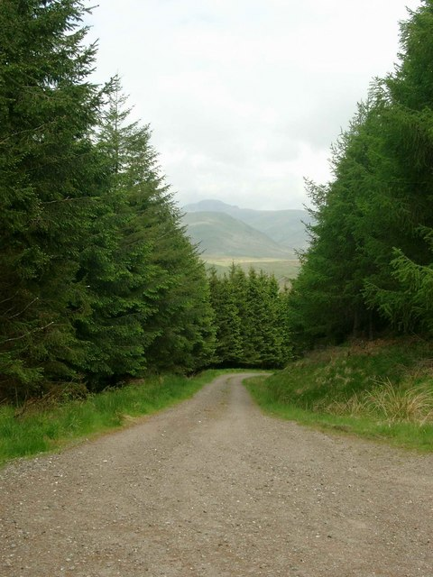 Forestry track north of Tom Dubh