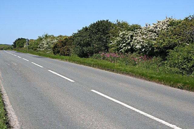 Hedgerow on the Main Road