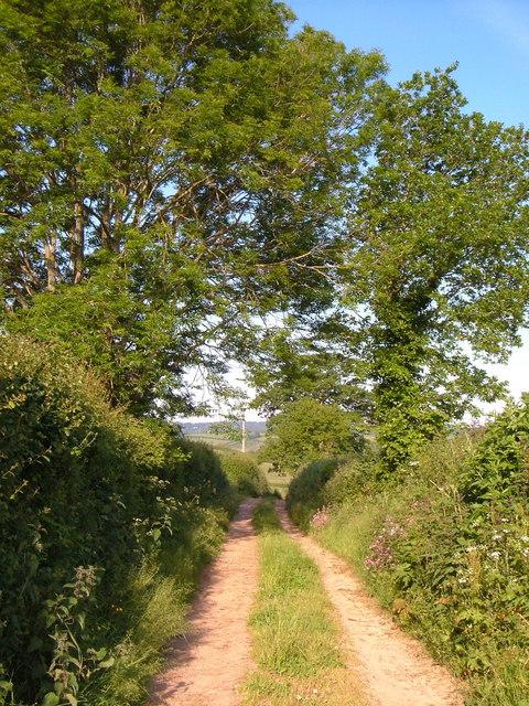 Sandgate Lane, Wiggaton