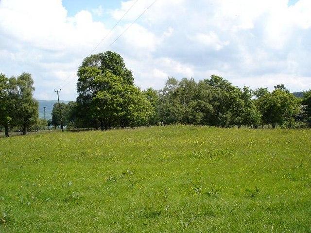 Green Llanrhychwyn