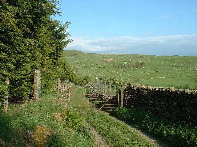 Farm lane near Ty Mawr farm