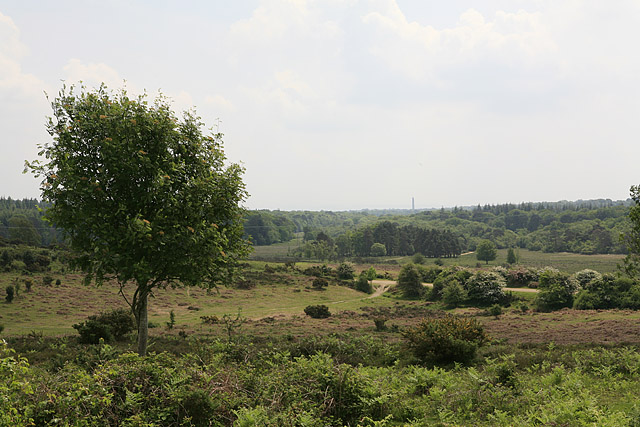 View from Hag Hill towards Sway Tower