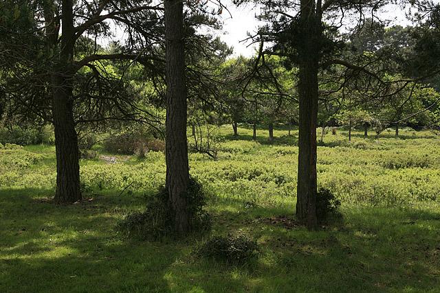Riverine bogland on north side of Hincheslea Wood