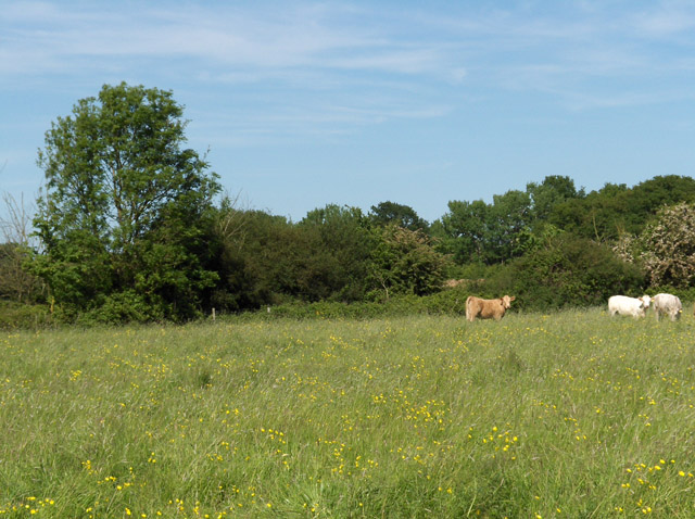 Farmland at Didcot