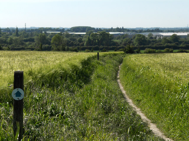 Barley fields at Didcot