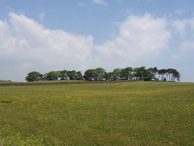 Copse near Highfield Farm
