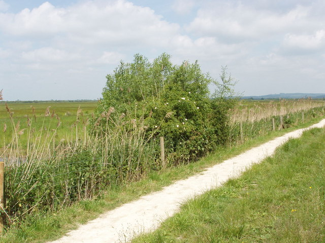 Rose bush and RSPB visitor trail on Otmoor