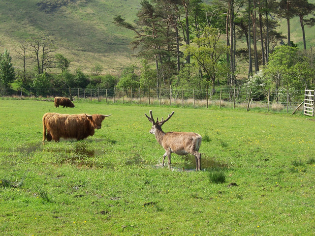 a Highland stand-off