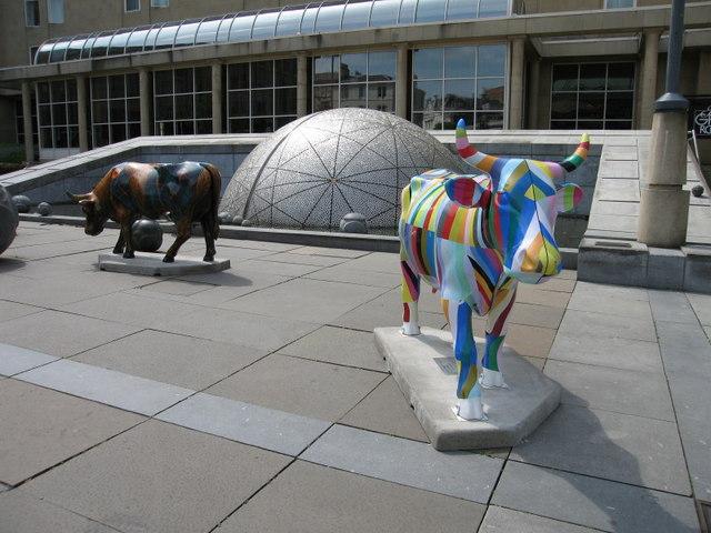 A Parade of Cows