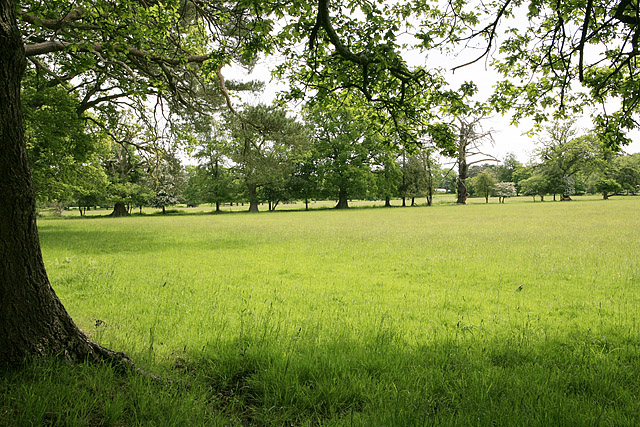 Fields at Hincheslea House