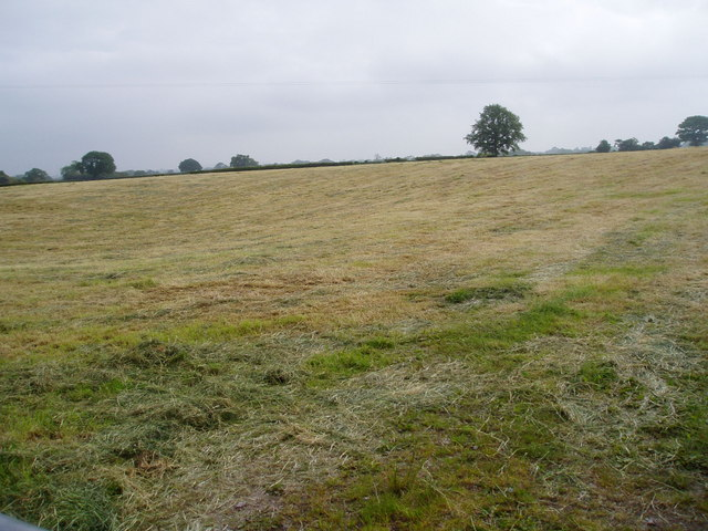 Grass cut for silage