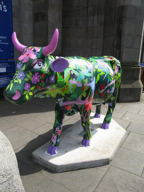 Rainforest Cow