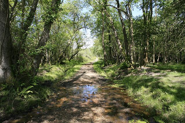 Path north of Wootton Coppice Inclosure