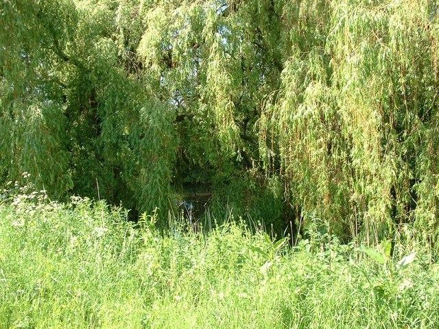Moat Road pond, Terrington St Clement