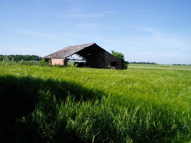 Barn and barley