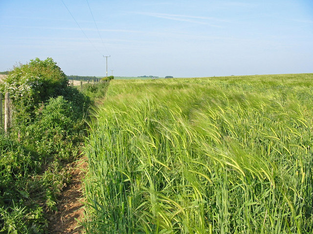 Barley Pentridge Dorset