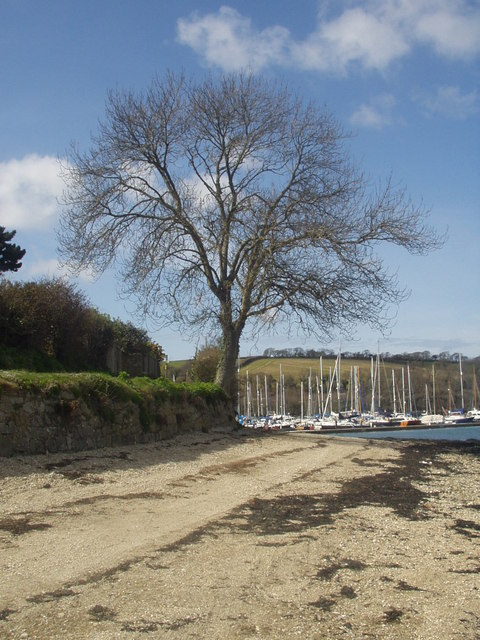 Riverside tree, Mylor