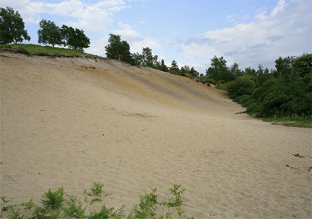Disused sand pit near Moyles Court School