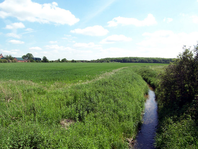 Looking towards Howsham Barff Wood