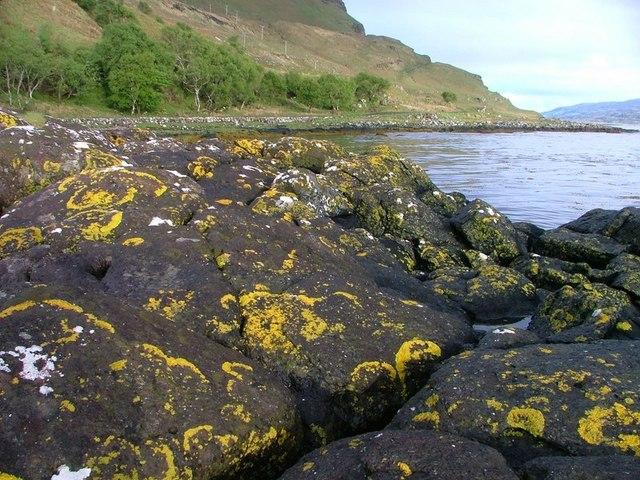 Lichen, Loch na Keal