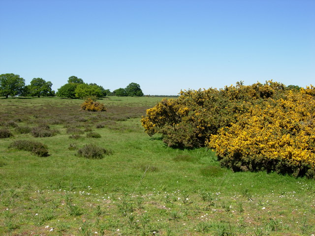 Thetford Heath