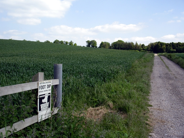 Track heading south east from the Little Somborne to King's Somborne Road