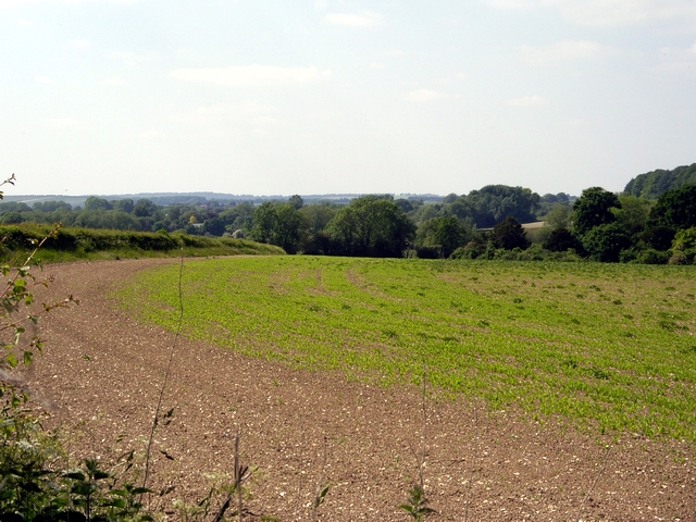 Balls Plantation and the Wallop Brook Valley