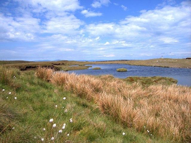 Boggy pond on Bryn Cras