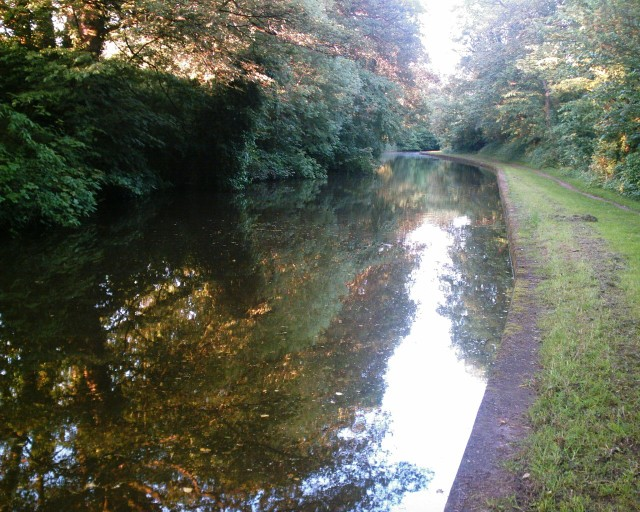 Trent & Mersey Canal through Bradleymeadow Wood, Little Leigh
