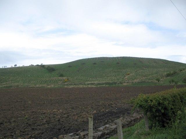 Broom Hill plantation