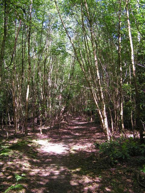 Footpath through the Woods behind Legsheath Farm