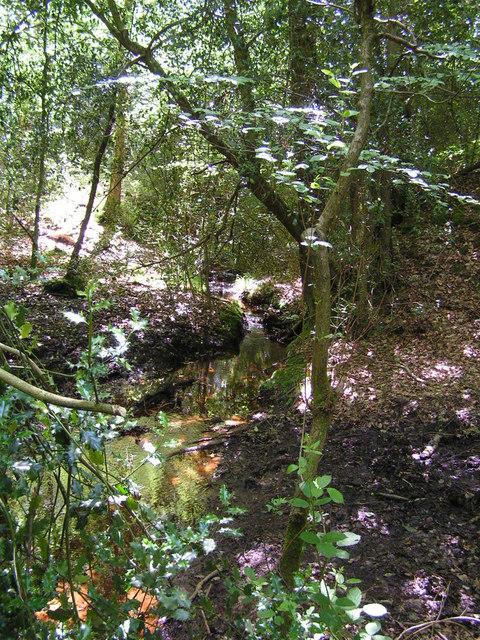 Woodland Stream, Ashdown Forest