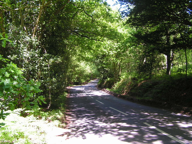 Byway through Ashdown Forest