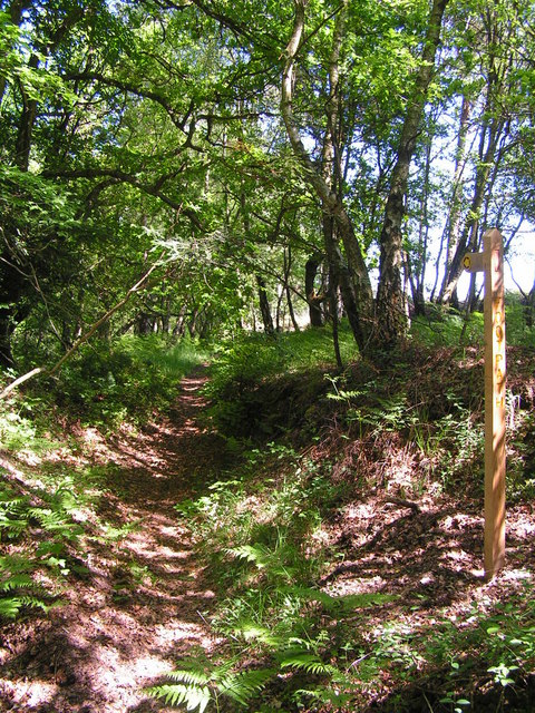 Footpath into the Woods