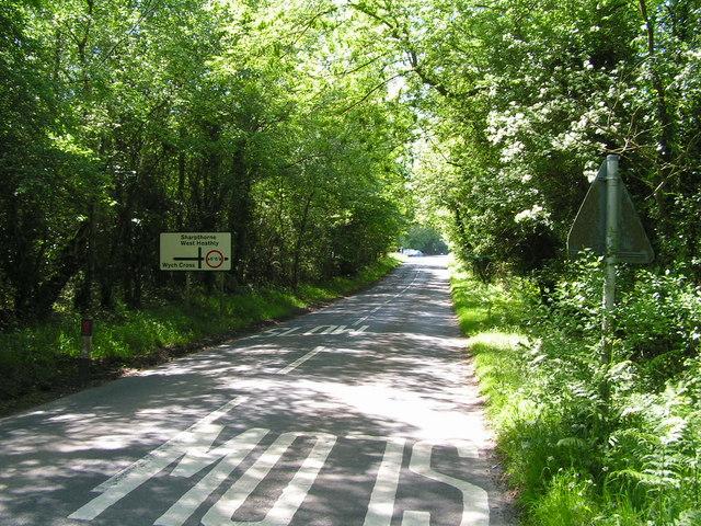 Road through Ashdown Forest