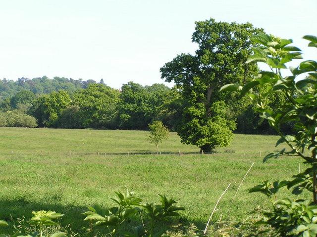 Trees & fields
