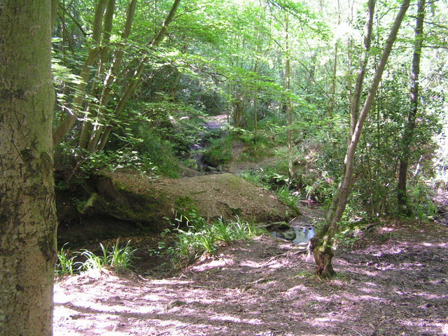 Woodland Stream, Ashdown Forest