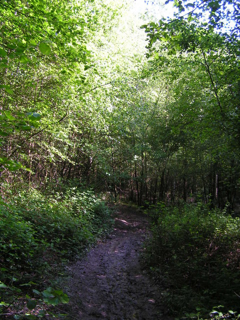 Muddy path through the woods, Blackland Farm.