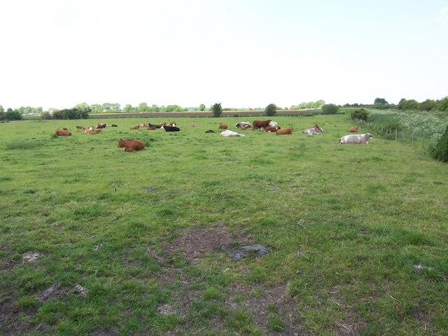 Near Gander Farm