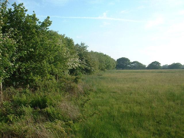 Railway Hedge