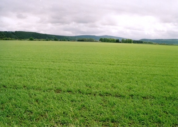 Fields at Dipple