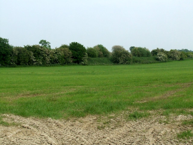 Old railway embankment in a field