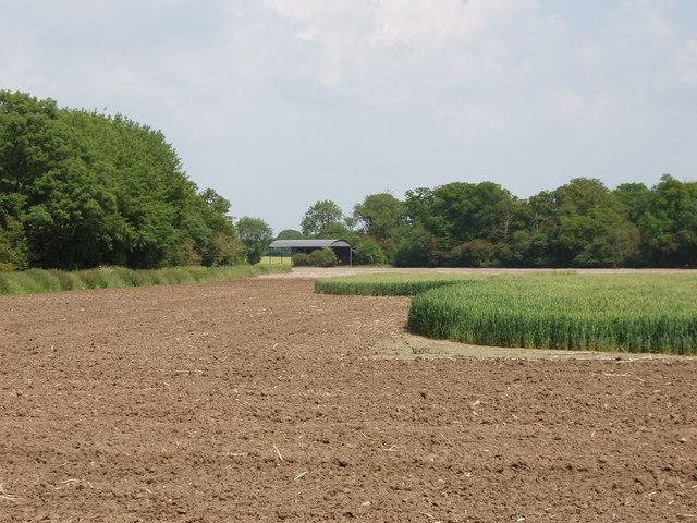 Fresh ploughing around wheat field, near Tetsworth