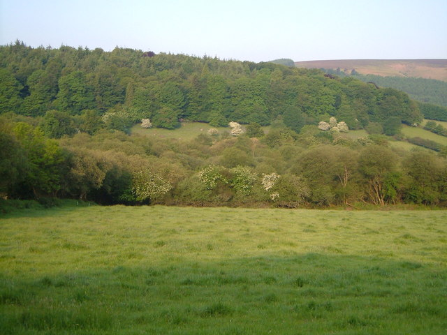 Vogwell Down